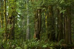 british columbia rainforest. forest landscapes photography collection. - stock photo