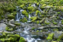 Stock Photo of rocky and mossy creek in olympic national park, washington, usa