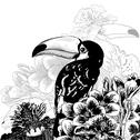 Stock Illustration of Tropical background with exotic flowers, Toucan