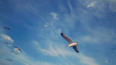 Flock of Seagulls Fly Over in Blue Sky - 29,97FPS NTSC Stock Footage