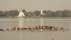 Amarapura Temples Birds Stock Footage