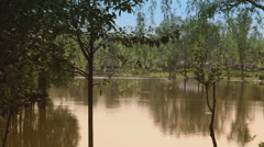 Pond Scene in Shanghai Stock Footage