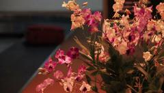 Orchid Airport Luggage Stock Footage