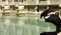 Pigeons Balances While Drinking from Fonte Gaia Siena - 25FPS PAL Stock Footage