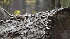 Mushrooms on a log Stock Footage