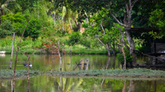 Duck swimming in pond Stock Footage