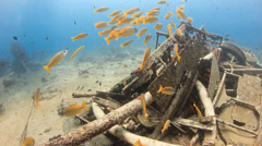 Colorful tropical fish around a wreck Stock Footage