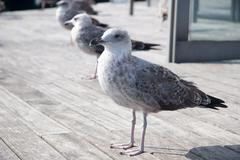 Stock Photo of Seagulls at Barcelona Port