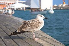 Seagulls at Barcelona Port - stock photo