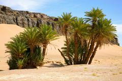 Palm trees and natural landscape in Morocco Stock Photos