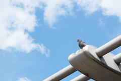 pigeon perching on the millennium bridge - stock photo