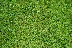 Green grass as background and texture Stock Photos