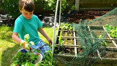 boy showing a colander with fresh harvested radishes - stock footage