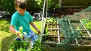 Stock Video Footage of boy showing a colander with fresh harvested radishes