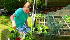 boy next to square foot garden, harvesting radishes - stock footage