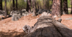 Old tree laying on path in woods 4k Stock Footage