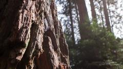 Aged tree with spider web in bark tilt 4k Stock Footage