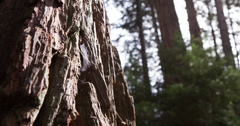 Spider web on aged tree in forest 4k Stock Footage