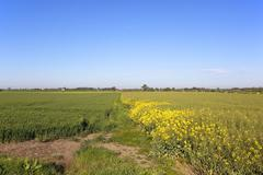 Arable fields under blue sky Stock Photos