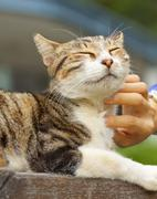 Cat scratching by human hands, feel very relax. - stock photo
