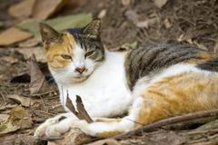 Cat with sharp eyesight on the ground - stock photo