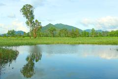 Stock Photo of Hong Kong wetland