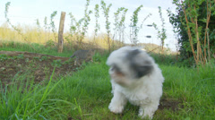 Friendly dog chases cat - dolly out Stock Footage