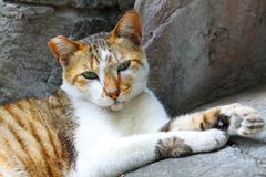 An innocent cat - stock photo
