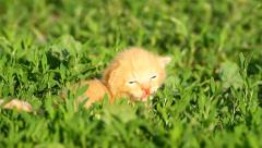 Meowing Baby Kitten on the green grass Stock Footage