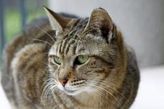 Cat with sharp eyesight looking at something Stock Photos