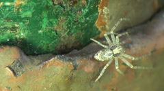 Spider macro insect Stock Footage