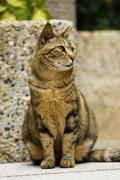 A cat with sharp eyesight Stock Photos