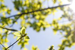 Green leaves in sunlight background Stock Photos
