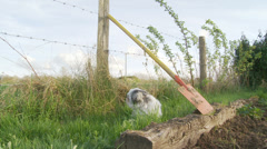 Dog sat under spade, cat walks past Stock Footage