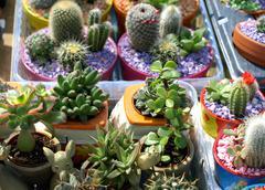 cacti - stock photo