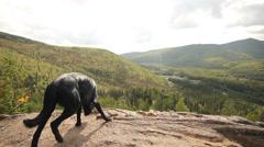 Cliffs Rocks Trails Forests Alaska Stock Footage