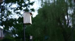 Swallow bird feeding baby Stock Footage