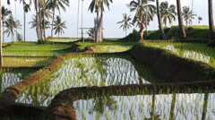 Terraced rice fields around Senaru, Lombok, Indonesia, Asia - stock footage