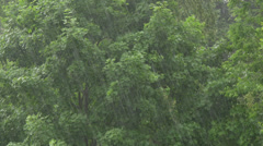 4K Heavy Rain Downpour in the Forest Stock Footage