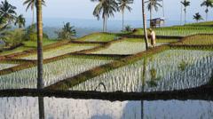 Terraced rice fields around Senaru, Lombok, Indonesia, Asia - stock footage