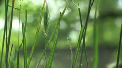 Flower bloomed small macro meadow Stock Footage