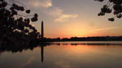 Cherry Blossoms - Wash Monument Timelapse Stock Footage