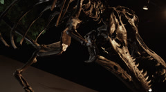 MS LA Dinosaur's skeleton in natural history museum, Lehi, Utah, USA Stock Footage