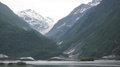 Bald Eagle Trees Alaska Stock Footage