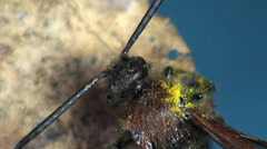 Large wasp hornet macro flower Stock Footage