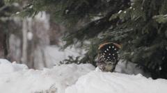 Birds Alaska Snow Stock Footage