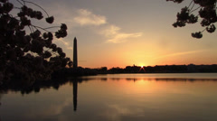 Cherry Blossoms - Wash Monument Sunrise Stock Footage