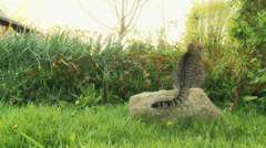 Cat sat on rock - dolly Stock Footage