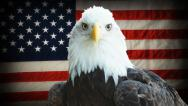 Stock Video Footage of Bald Eagle American Flag
