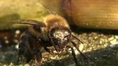Bee macro sinks in water Stock Footage